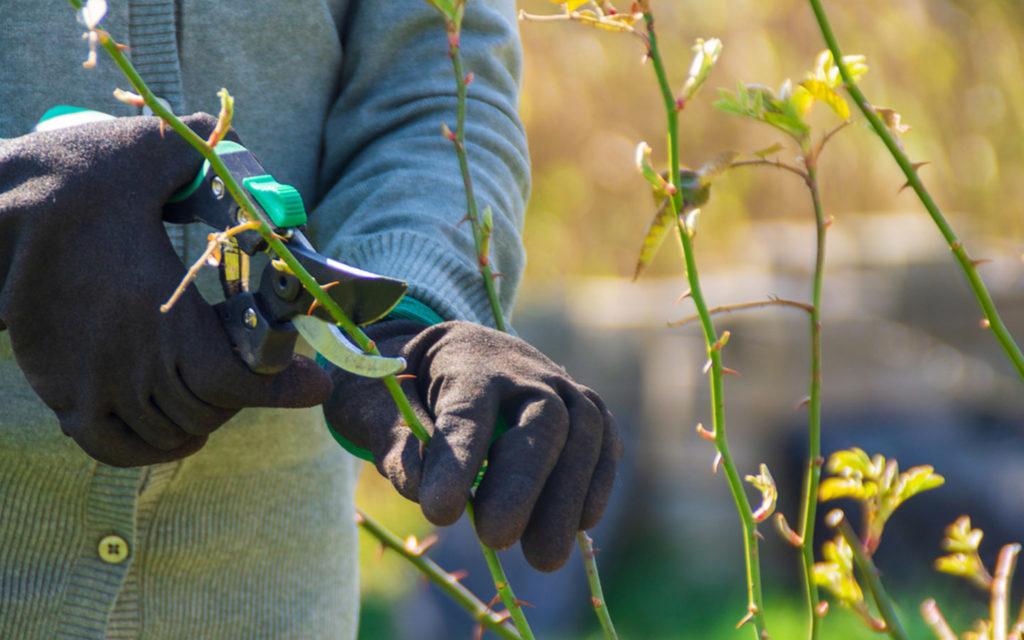 هرس کردن گیاهان